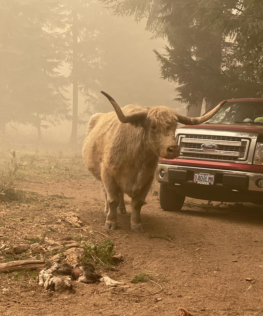 Oregon Fires 2020